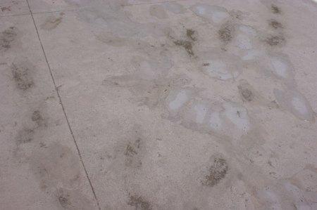 """El suelo """"nuevo"""""""